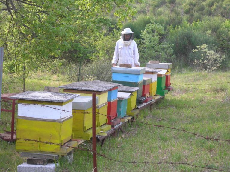 apiario Bigiarelli