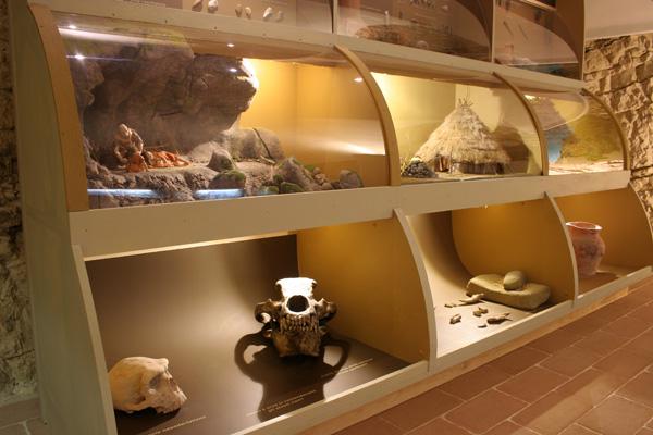 museo storia naturale polo museale santa lucia